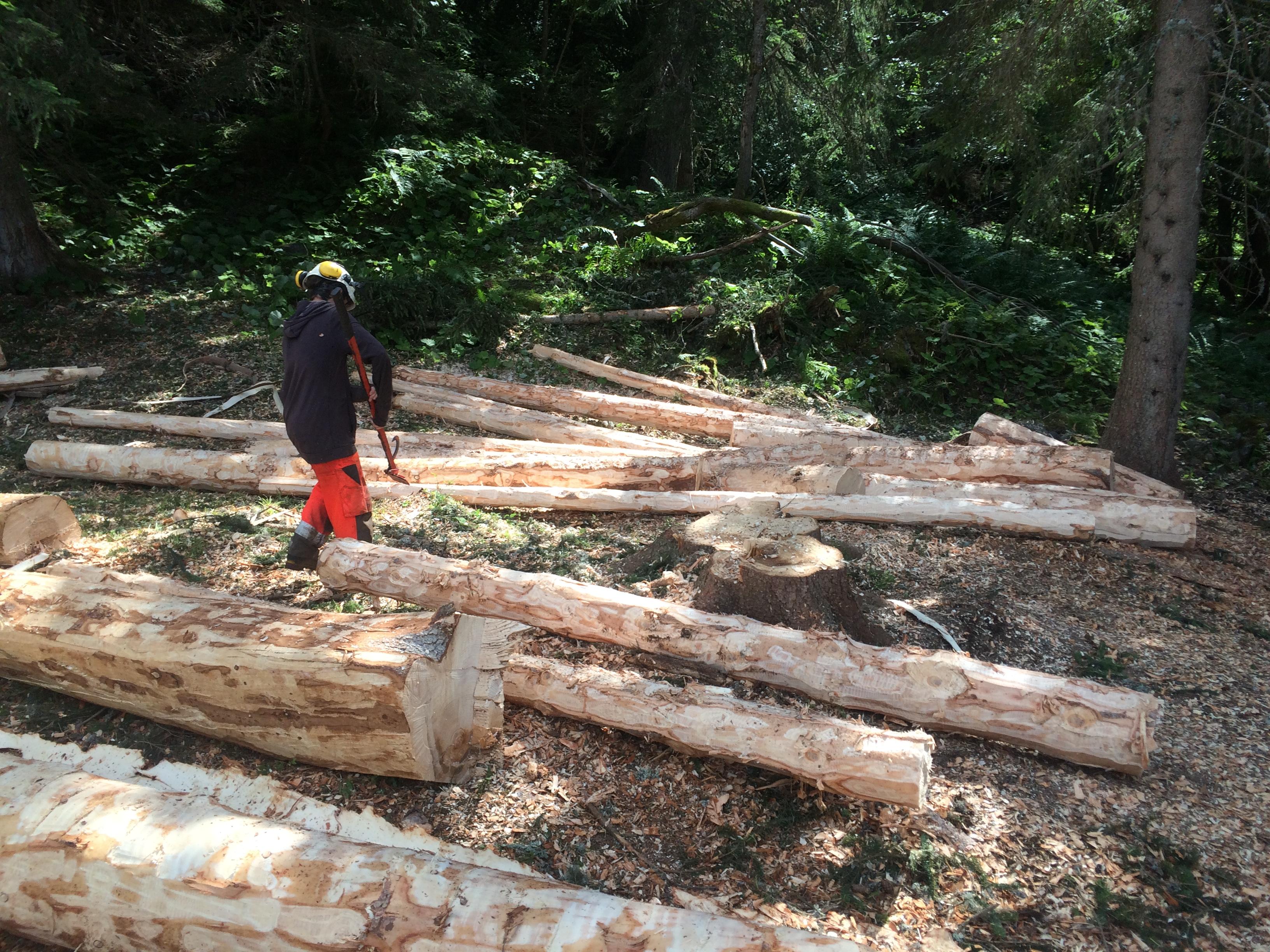 Ecorçages de troncs